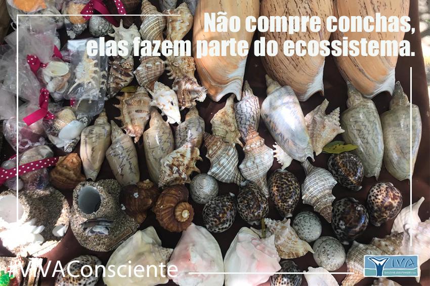 conchas não compre2 10 15